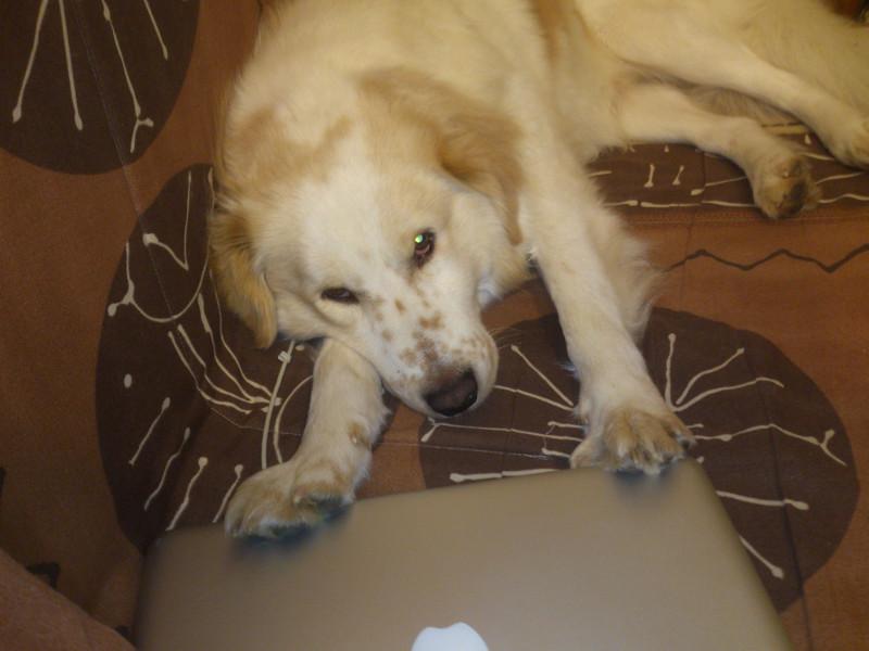 Ugo, il mio cane, allontana con le zampe il Macbook che ha vicino.
