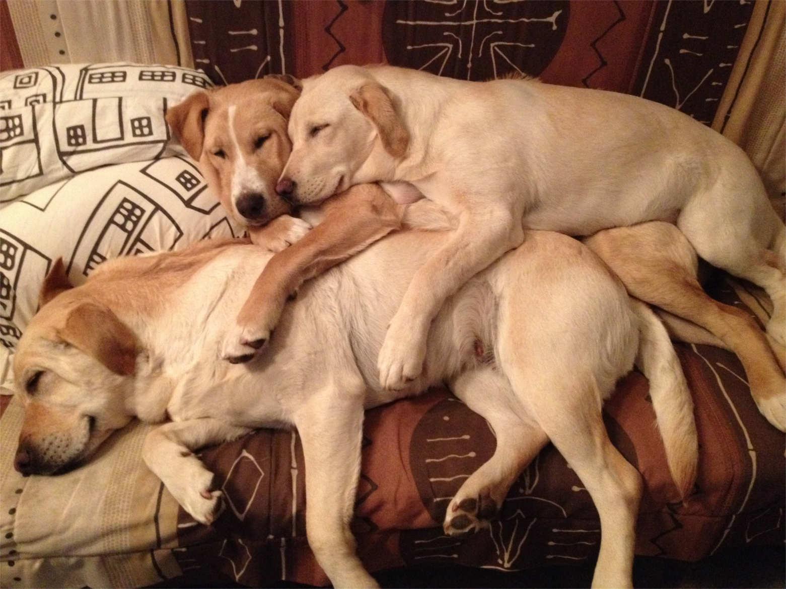 Kira dorme sotto i suoi figli Trane e Naima.